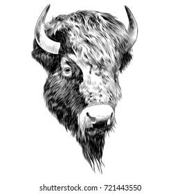 bison sketch vector graphics black and white monochrome figure head