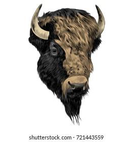 bison sketch vector graphics color picture head