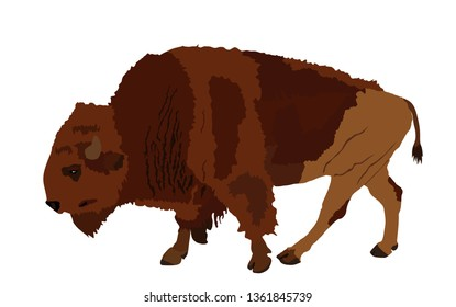 Bison vector illustration isolated on white background. Portrait of Buffalo, symbol of America. Strong animal, Indian culture.