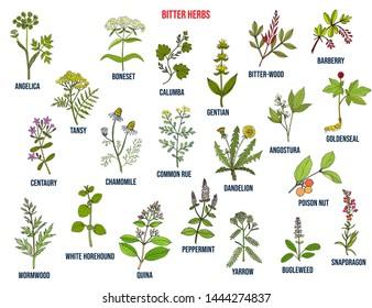Bitter herbs collection. Hand drawn set of medicinal herbs