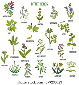 Bitter herbs collection. Hand drawn set of medicinal herbs