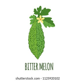 Bitter melon vector logo in flat style. Isolated object. Superfood Bitter melon medical fruit. Vector illustration.