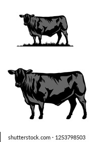 Black Angus cattle cow illustration