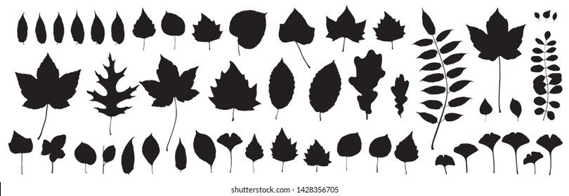 Black autumn leaves or foliage silhouettes isolated on white background. Big set of vector fall tree leaf shapes with maple, oak, birch and other nordic leave
