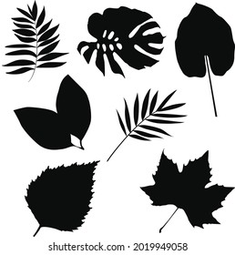 Black autumn leaves or foliage silhouettes isolated on white background. Set of vector fall tree leaf shapes with maple, aspen, birch, walnut, palm, pothos, banana, philodendron, other nordic leaves.