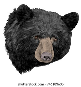 black bear sketch head vector graphics color picture