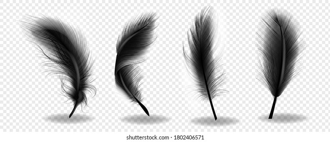 Black bird fluffy feather. Feathers realistic silhouettes on transparent background. Vector illustration