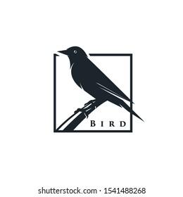 black bird logo design vector