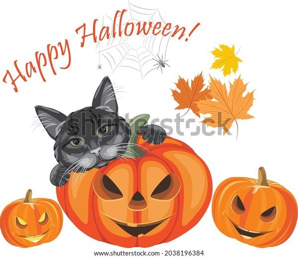 black-cat-laughing-pumpkins-halloween-60