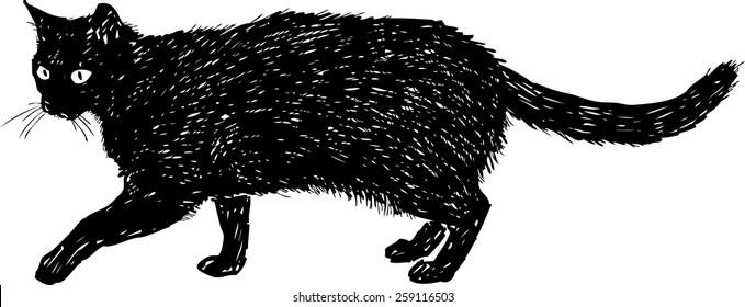 black cat on a walk