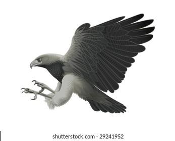 Black chested Eagle buzzard attacking!