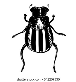 Black contour scarab isolated on white background. Beetle illustration for prints and design.