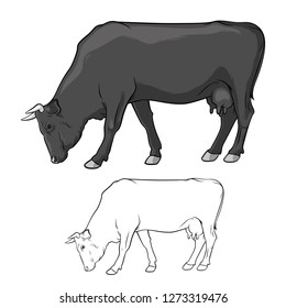 Black Cow graze. Cow in lines. Cow on white background. Vector