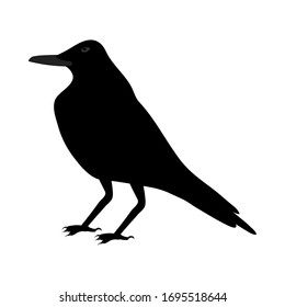 Black Crow Over White Background for Creating Halloween Designs.  Vector illustration.