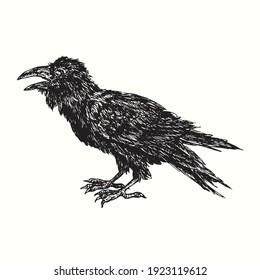 Black crow side portrait. Ink black and white drawing. Vector illustration