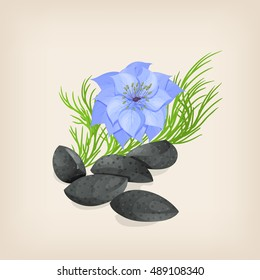 Black cumin. Seeds, flowers and leaves. Vector illustration.