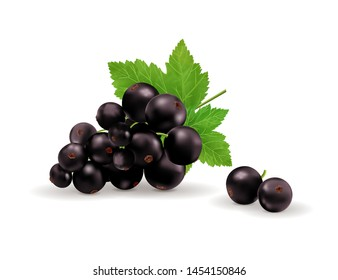 Black currant isolated on white background. Vector realistic, 3d illustraton