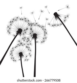 Black dandelions on a white background. EPS vector image. Plant motif, flower and seeds. Decorative graphics for printing. Romantic vision of the end of summer. Flight into the unknown.