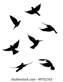 Black doves on a white background
