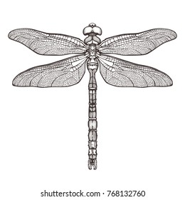 Black dragonfly Aeschna Viridls, isolated on white background. Dragonfly tattoo sketch. Coloring books. Hand-drawn vector illustration