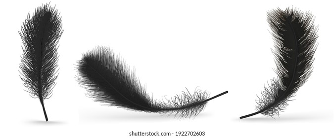 Black feather on a white background. Realistic vector illustration
