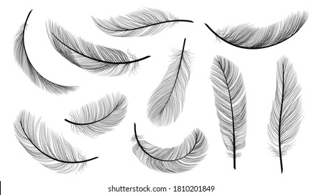 Black feathers. Isolated flying feathering, plumage of black bird vector illustration