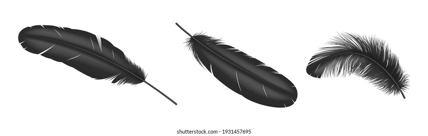 Black feathers. Realistic bird weightless plume in different angles set, fluffy soft swan and goose feather isolated on white background. 3d vector illustration