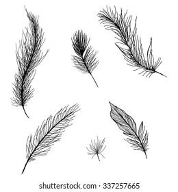 Black feathers set isolated on white background