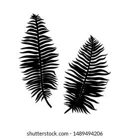 Black fern Leaf Silhouette isolated on white background. Vector Illustration.