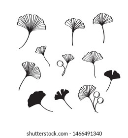 Black ginkgo leaves and nuts vector illustration set