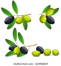 Black and green olives on branch isolated on white background