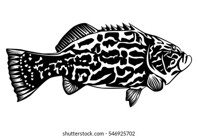 Black grouper fish  isolated on white