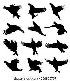 Black Grouse in flight silhouette