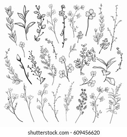 Black Hand Drawn Herbs, Plants and Flowers, Branches, Florals. Vector Illustration