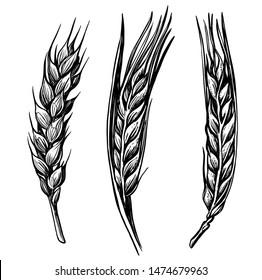 black hand drawn wheat ears sketch