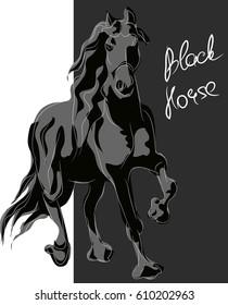 black horse. sketch