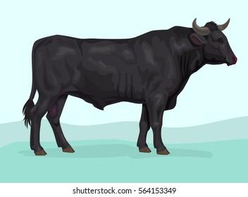 black japanese wagyu bull breed