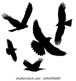 A black kite and rook or crow silhouette, a predator hovering in the sky, isolated on a white background. Bird, vector stock illustration.