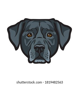 Black Labrador retriever dog isolated outlined vector illustration