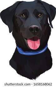 Black Labrador Retriever Dog Vector Illustration