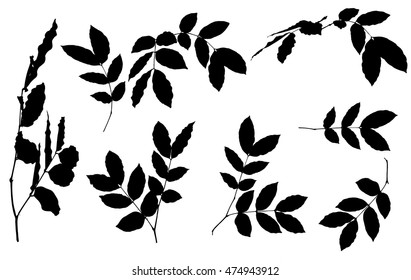 Black  leaves silhouettes  on white background
