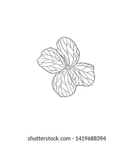Black Line Art Cuckoo Flower in Hand Drawing Vector Art. Cardamine pratensis , lady's smock, mayflower, or milkmaids.