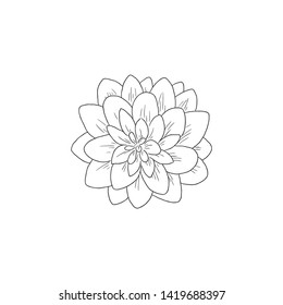 Black Line Art Dahlia Flower in Hand Drawing Vector Art. The dahlia was declared the national flower of Mexico in 1963. Asteraceae Family