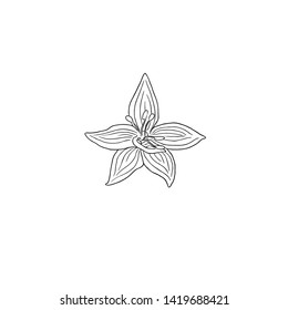 Black Line Art Dianella Flower in Hand Drawing Vector Art. Commonly called flax lilies or Flax Lily