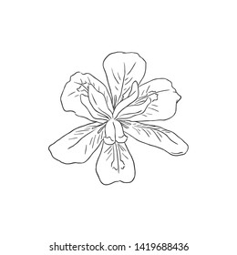 Black Line Art Dietes Flower in Hand Drawing Vector Art. Common names include wood iris, Fortnight lily, African iris, Japanese iris and Butterfly iris