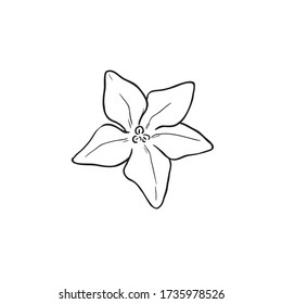 Black Line Art for Mayflower (Trailing Arbutus) Flower in Hand Drawing Vector Art is a low, spreading shrub in the family Ericaceae