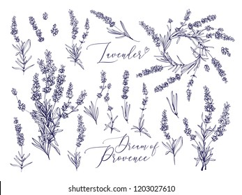 Black line lavender. Vector hand drawn tea herb Illustration set. Vintage retro sketch element for labels, packaging, textile and cards design.