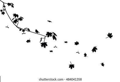 Black maple branch with flying leaves