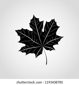 Black Maple leaf vector icon isolated on gray background