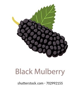 Black mulberry icon. Isometric illustration of black mulberry vector icon for web